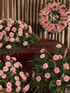 Pink Carnation  Tribute Series