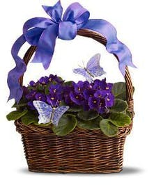 Two African violet plants are presented in a basket adorned with faux butterflies and a matching ribbon. Approximately 14