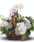 Whimsical Orchid Basket