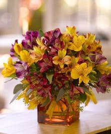 Autumn Alstromeria Fall Flowers Columbus Florists Griffins