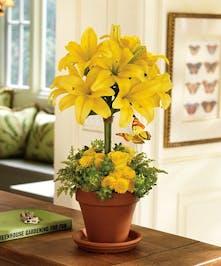 A Clay Pot of Spring Yellows