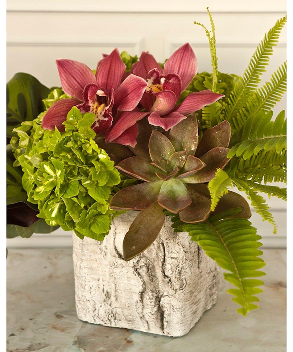 Barbera fleur columbus oh florists newark ohio flowers izmirmasajfo