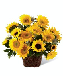 Sunny Dayz by Columbus Ohio Flowers Griffins Floral Design