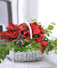 A stunning basket of Poinsettia and Ivy plants