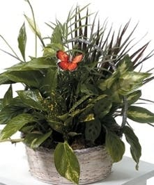 Garden of Serenity Dish Garden Baskets Columbus Ohio Griffins Floral Design