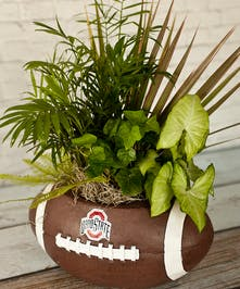 Ohio State Football Garden Columbus Oh Florists Newark Ohio Flowers