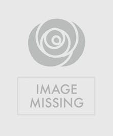 Paisley Sunny Delight Flower Arrangement Columbus Ohio