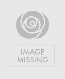 A simple and clean house plant