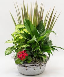 Easy Care Combination Of Green Plants