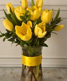Yellow Tulips Columbus Oh Bulb Plants Newark Ohio