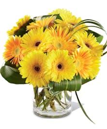 Sunny Surprise Get Well Flowers Columbus Ohio