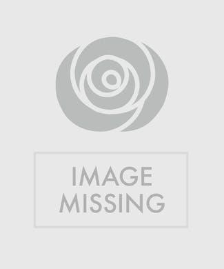 Orchid Anthurium Combo Planter
