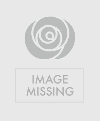 Orchid & Bromeliad Combo Planter