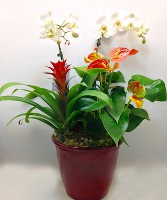 Tropical Garden Delight