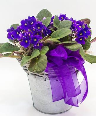 Whitewash Violet Tin